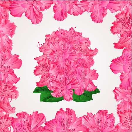 shrub: Seamless texture rhododendron in a frame pink flower shrub Mountain vector illustration