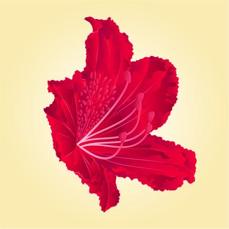 shrub: Red Mountain rhododendron flower simple spring shrub vector illustration Illustration