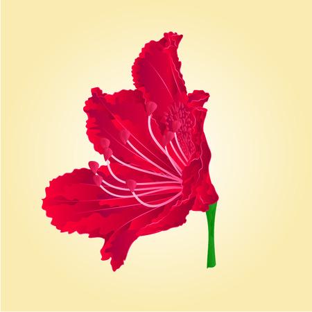 azalea: Red flower isolated Mountain rhododendron shrub spring vector illustration
