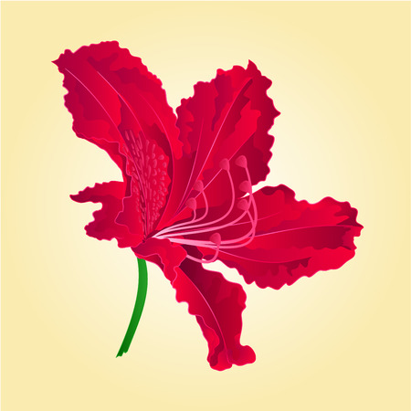 nectars: Flower simple red rhododendron shrub spring Mountain vector illustration Illustration