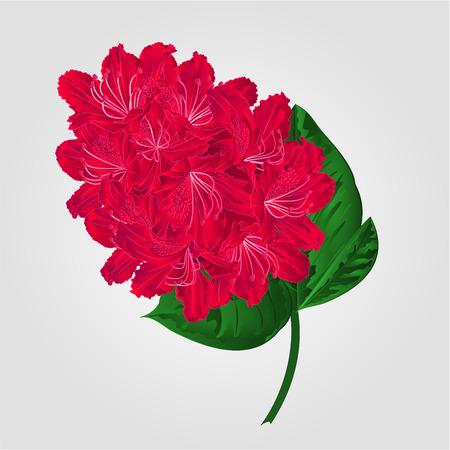 azal�e: Red brindille de rhododendrons dans la montagne de fleurs vecteur arbuste illustration