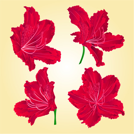 pollinate: Blossoms red rhododendron mountain shrub vector illustration