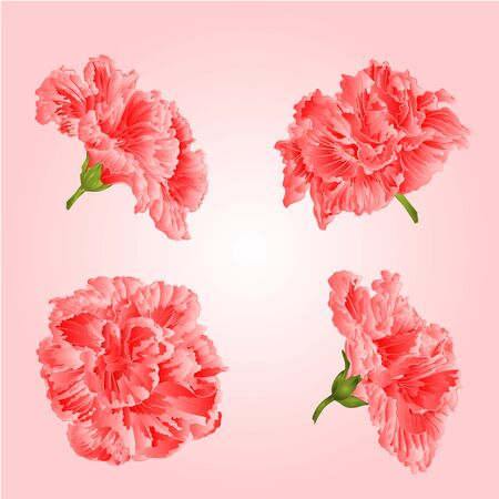 plant delicate: Pink hibiscus flowers tropical blossoms houseplant vector illustration Illustration
