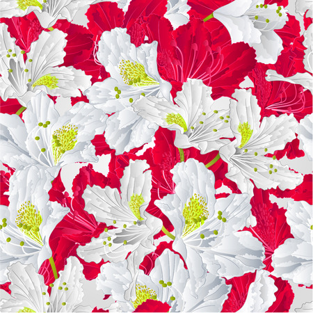 shrub: Seamless texture  rhododendron  red and white flower Mountain shrub vector illustration