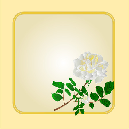 rosebud: Golden frame with  white  rose greeting card festive background place for text vector illustration