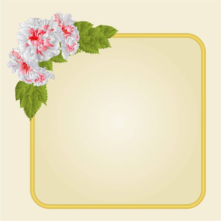 whites: Golden  frame with whites hibiscus greeting card festive background place for text vector illustration