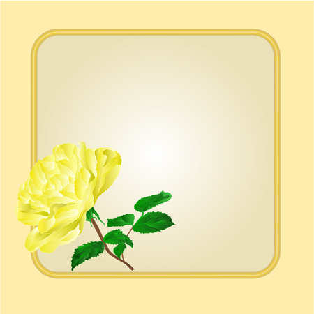 yellow rose: Golden frame with  yellow rose greeting card festive background place for text vector illustration Illustration