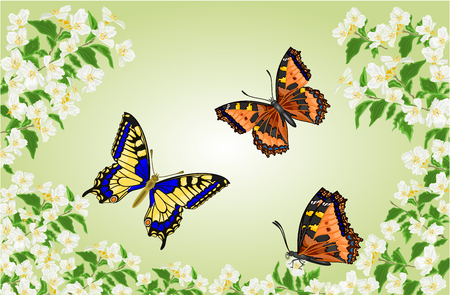inachis: Butterflies Swallowtail Inachis io and Vanessa atalanta in jasmine trees  illustration Illustration