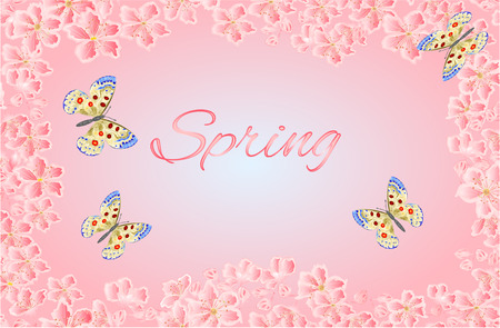 apollo: Butterfly parnassius and of sakura blossoms spring background vector illustration