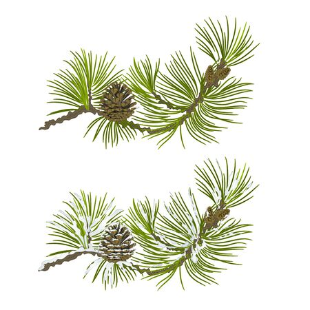 snow cone: Pine branch with snow and pine cone christmas theme vector illustration