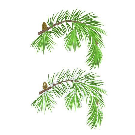 snow cone: Branch of Christmas tree with pine cone with snow vector illustration