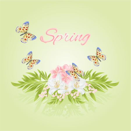 pink flower: Spring cherry blossom and jasmine with butterflies green background vector Illustration