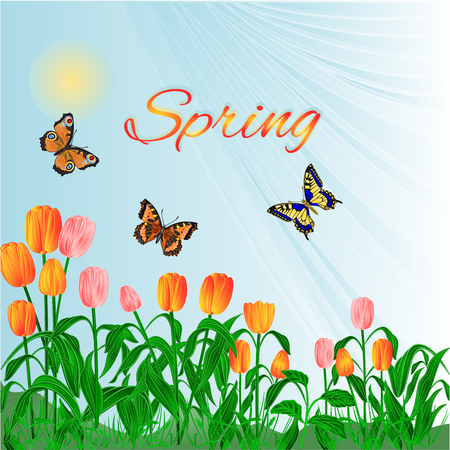 pink tulips: Spring  blossoms tulips and  butterflies  background vector illustration