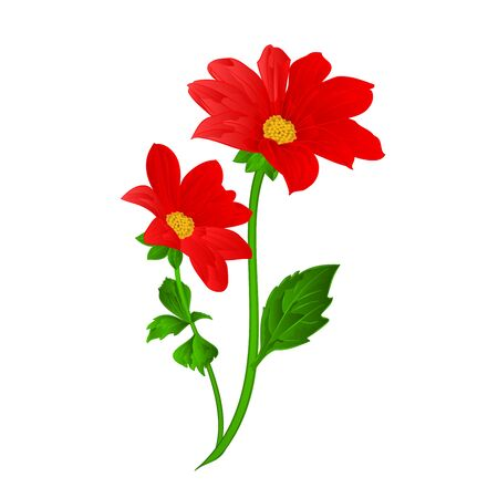 dahlia: Red Dahlia flower stem summer Vector illustration