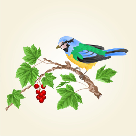 titmouse: Titmouse bird on a branch currant vector spring background illustration