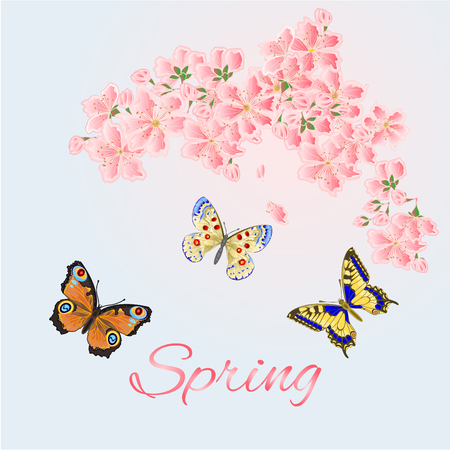 pink flower: Spring background cherry and butterflies vector illustration
