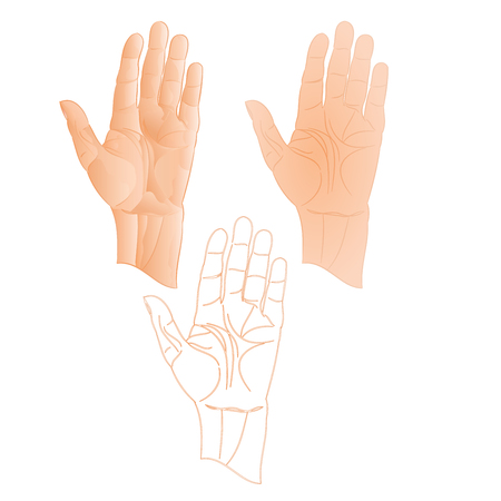 left hand: Human left hand pointer stop  three color drawing and outline vector illustration