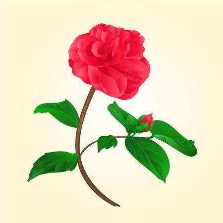 camellia japonica: Camellia Japonica flower with bud on a white background vektor illustration