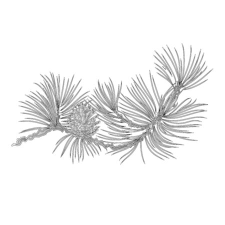 pinecone: Pine branch and pine cones as vintage engraving  illustration Illustration