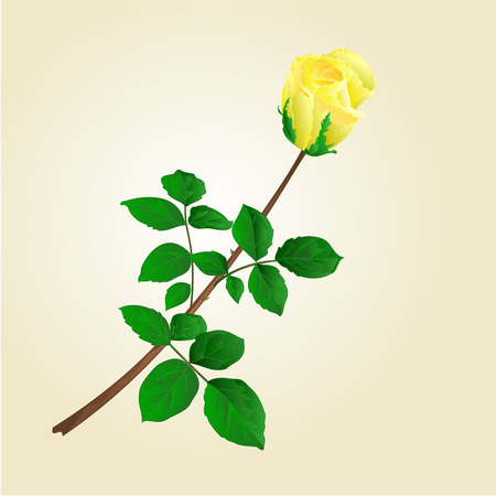 centifolia: Yellow rose bud with leaves illustration