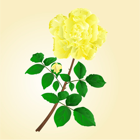 centifolia: Twig yellow rose stem with leaves and bud illustration