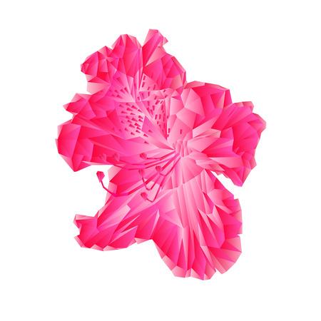 shrub: Flower pink simple rhododendron polygons Mountain spring shrub illustration Illustration