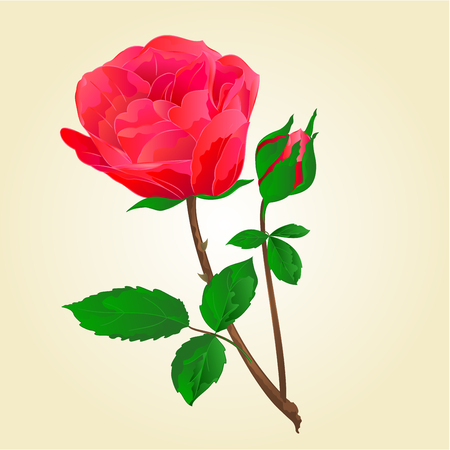 freshens: Twig Red rose stem with leaves and bud illustration