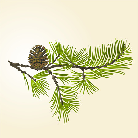 Pine branch and pine cone natural background vector illustration