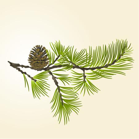 Pine tak en dennenappel natuurlijke achtergrond vector illustratie Stockfoto - 54283286