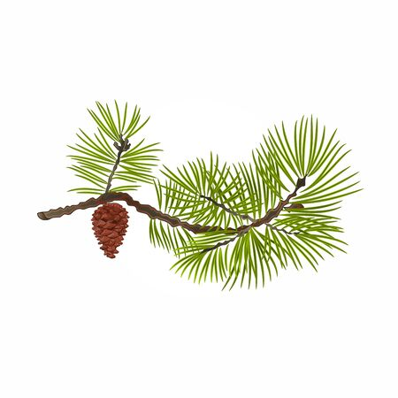 Pine branch and pine cone natural background illustration