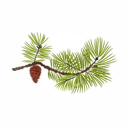 Pine tak en dennenappel natuurlijke achtergrond illustratie