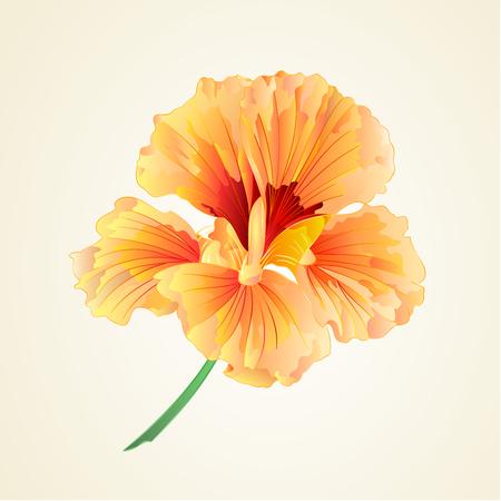 nasturtium: Spring flower watercress vegetable healthy food illustration