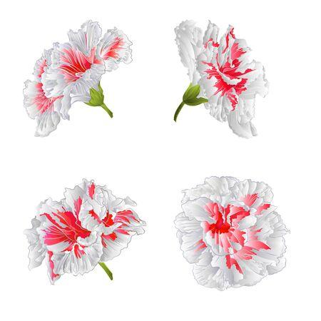 houseplant: Tropical blossoms white hibiscus houseplant illustration