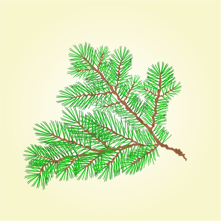 conifer: Spruce branch lush conifer isolated illustration