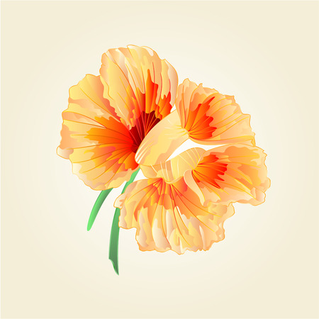 berros: Flor berros verduras ilustración de la comida sana Vectores
