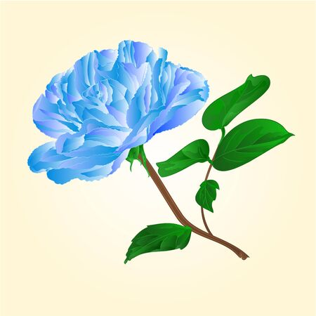 centifolia: Blue rose stem with leaves and blossoms illustration Illustration