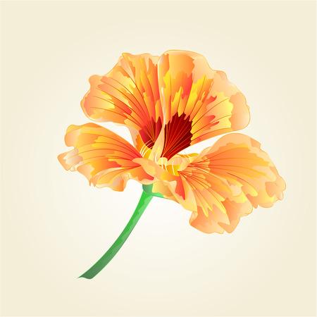 watercress: Watercress flower vegetable healthy food illustration