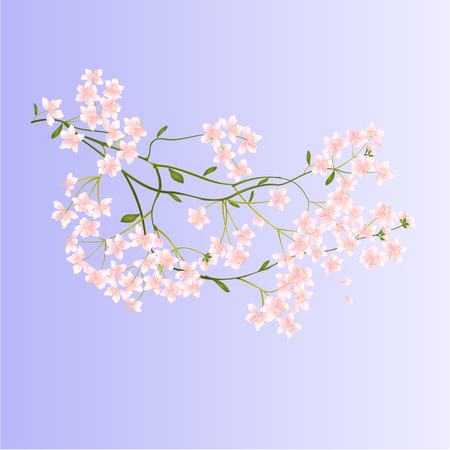 petite fleurs: Twig with small flowers nature background illustration Illustration