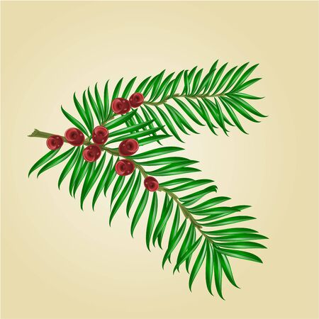 yew: Yew branches with red berries isolated nature background illustration