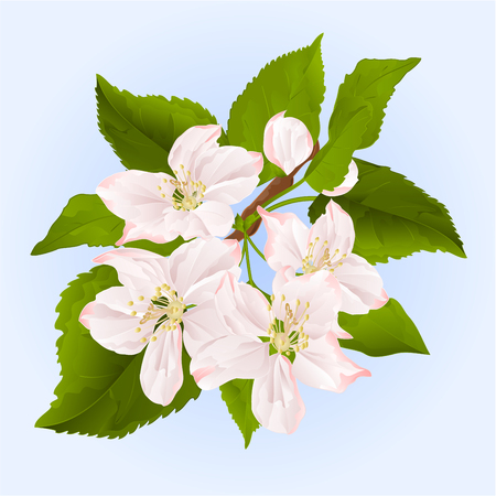 a twig: Twig of apple tree with flowers vector illustration