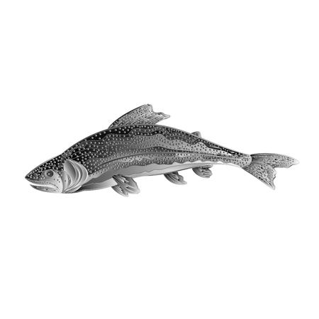 American rainbow trout salmon-predatory fish as wrought metal vintage vector illustration