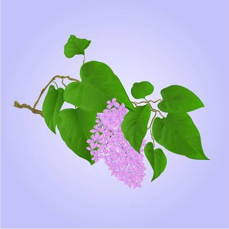 Purple Lilac branch with flowers and leaves natural background illustration