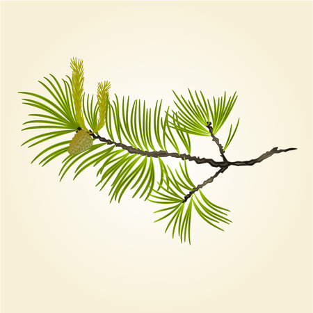 pinecone: Blooming pine tree Branch natural background illustration