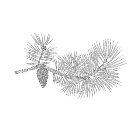 Pine tak en denappel gravure natuurlijke achtergrond illustratie