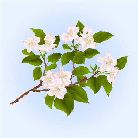 appletree: Branch of apple tree with flowers illustration