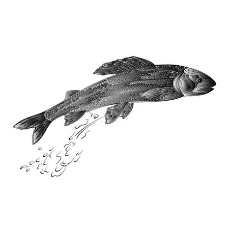 predatory: Grayling  salmon predatory fish as wrought metal vintage illustration