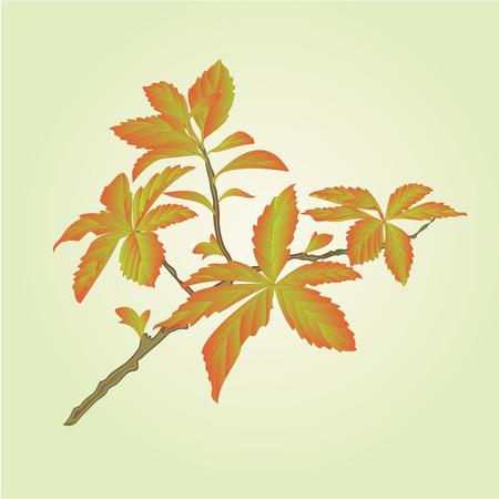 shrub: Twig decorative shrub colorful leaves illustration