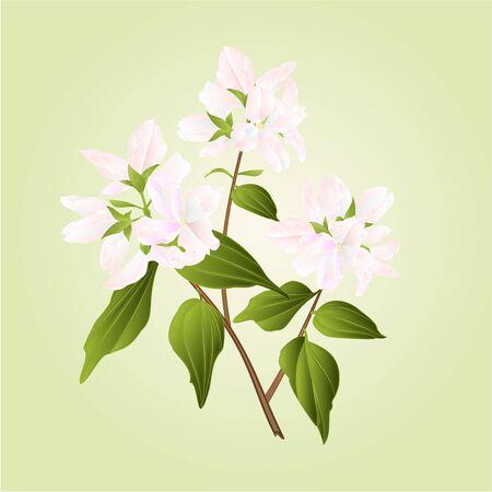 shrub: Branch decorative shrub nature background vector illustration Illustration