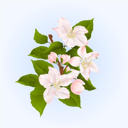 ramo di un albero di mele con fiori e boccioli di primavera sfondo illustrazione