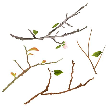 Branch various Sprigs twig tree and bush illustration